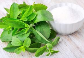La stevia, l'édulcorant qui a le vent en poupe
