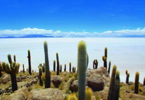 Le Salar de Uyuni et ses chandeliers candélabres sont l'image forte du plus grand désert de sel au monde. Un désert qui renferme aussi les plus grandes réserves mondiales de lithium. DMITRY TRASHCHENKO