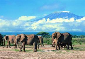 Le parc d'Amboseli avec le Kilimandjaro en arrière-plan. KENY TOURIST BOARD