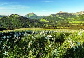 Une fois arrivés au sommet, laissez-vous surprendre par la magnifique vue panoramique qui s'étend de la Riviera au Jura. DR